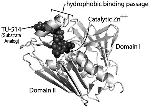 LpxC Pymol structure; Curr Pharm Biotechnol. 2008 Feb;9(1):9-15.