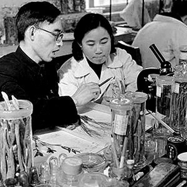 Tu Youyou (right) and her tutor Lou Zhicen in China Academy of Chinese Medical Sciences in 1950s