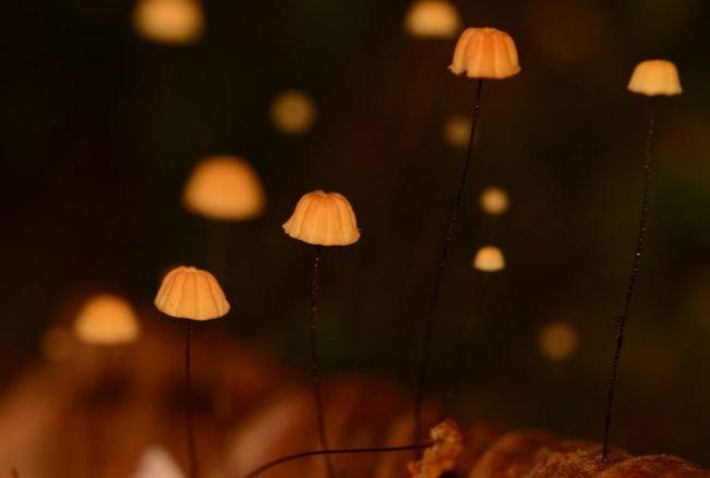 Mushrooms Rio Gloria, Panama