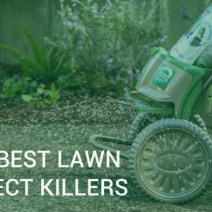 Lawn pest control - Best lawn insect killers