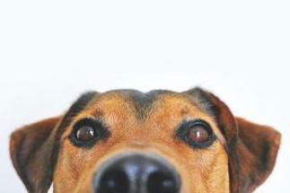 Спрей за бълхи 1 - куче
