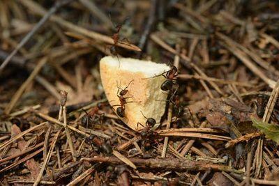 Против мравки в къщи 1 - мравки