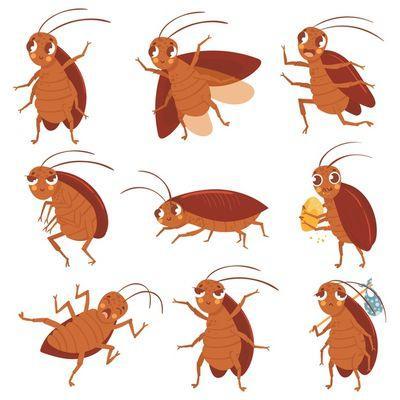 Пръскане против хлебарки 1 - картинка на хлебарки