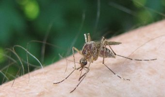 Insect Borne Viruses – What You Need to Know