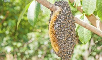 Spot the Nest, Don't Get Stung! How a Nature Day Camp Counselor Prevents Bee Stings