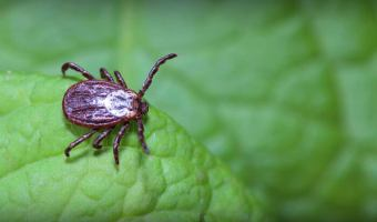 Ticks in Autumn?
