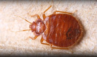 Basic Bed Bug Prevention