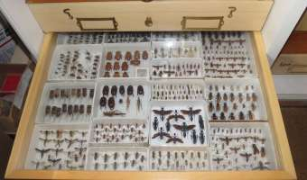 """How New Species of """"Bugs"""" Are Discovered"""