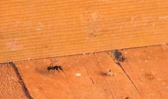 Best Bug Control Methods for the Home
