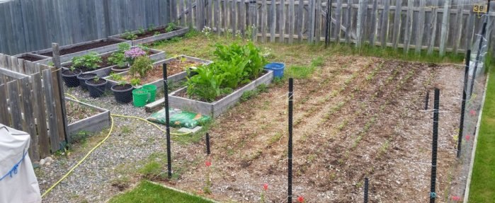 The garden as of the beginning of July.