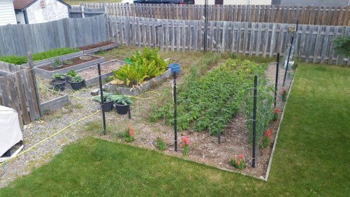 The garden in September. Some things have been harvested already, but others still need more time.