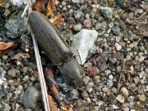 Widzew 07.05.2011 Przestraszony odsprężykował z liscia wprost na ziemię