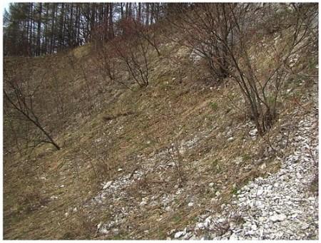 Młoszowa Kwiecień 2012 Biotop larw Microdon Fot. Rafał Celadyn