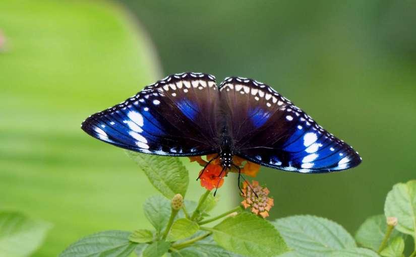 Die vielfältige Schönheit von Pflanzen- und Tierwelt in Nordborneo