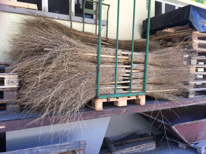 Bambusbesen-Lager in der FIliale eines Grossverteilers. Der Bambusbock entwickelt sich in den Besenstielen. Bild: Michael Gilgen, CC BY-SA-NC 4.0