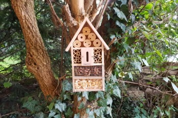 Pearl Insektenhaus