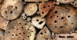 Insektenhotel wird nicht angenommen