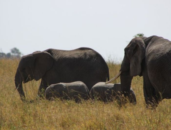 Group of Elephants in Tarangire National Park, Tanzania