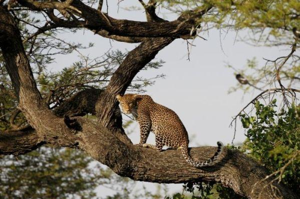 3 Nights –4 Days safari Ngorongoro Serengeti Manyara