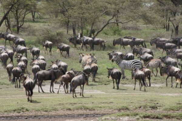 4-Days-safari-Ngorongoro-Serengeti-Manyara