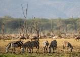 Lake Manyara National Park Tanzania