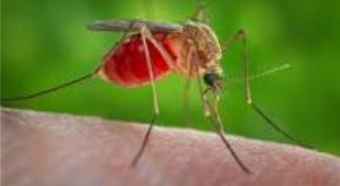 Zika virus spread may draw stock market investor attention