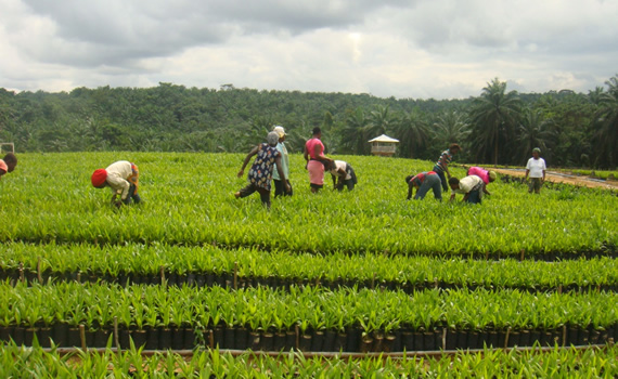 Stakeholders Discuss Food Security, Want Improved Seeds for Farmers