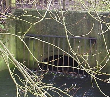 Trying to force the bourne into underground culverts, or pipes, as Thames Water has done along the water course from Woldingham to Purley, creates flooding problems at times of heavy rainfall, when the volume of water cannot fit into the piping system