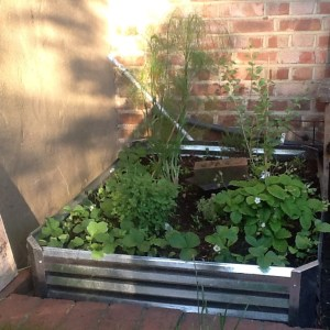 Esiah Levy has used some recycled materials to make the raised bed in his small, central Croydon garden
