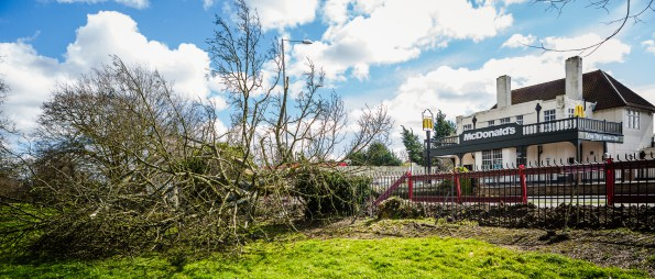 Timber! Lee Townsend's photograph of the fallen tree on Wickham Road today