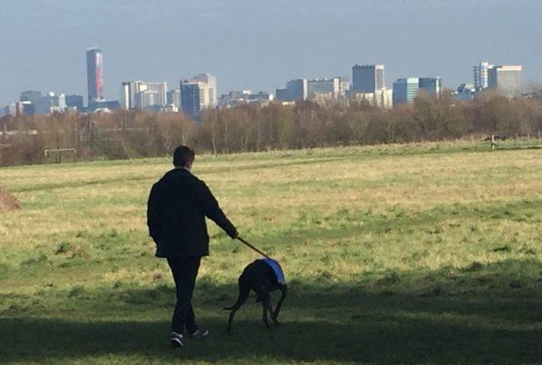 dog-walking-at-the-paddock-feb-2017