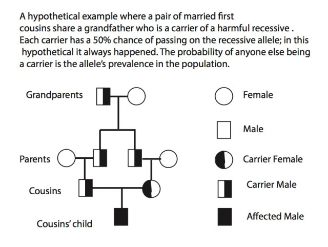 Consanguineous marriages problem example