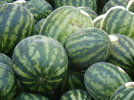 melons_1