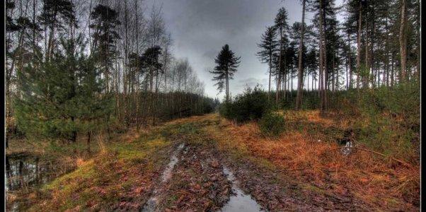 rainy_path_by_21711-d60m6d0