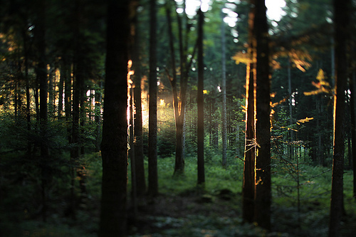 beautiful-forest-light-nature-sunlight-Favim.com-197959