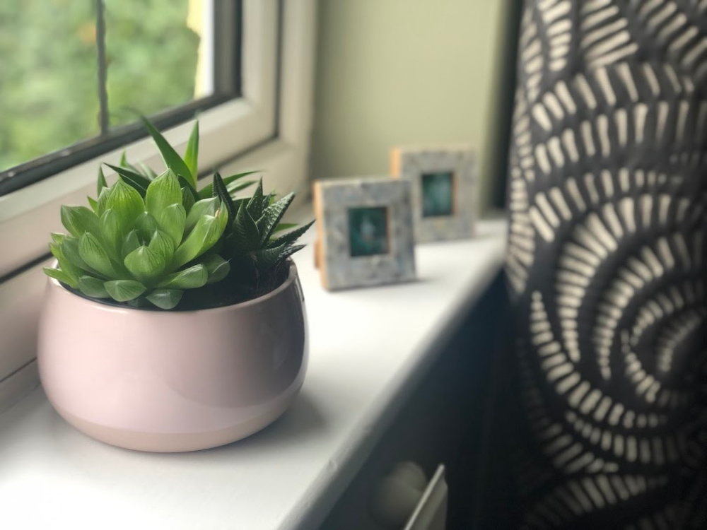 IKEA succulents