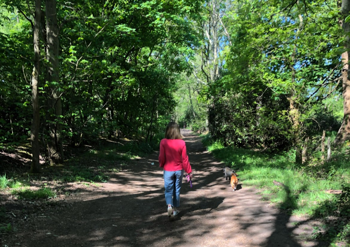walking in the woods with dogs