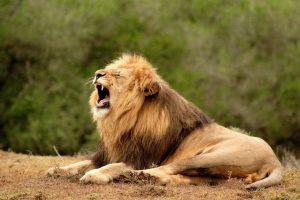 Finding our Roar
