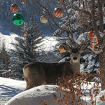Holiday decorating and real estate | Park City Real Estate