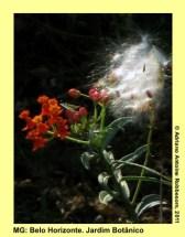 adrianoantoine_mg_bh_jardim_botanico_0006