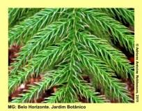 adrianoantoine_mg_bh_jardim_botanico_0008