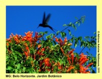 adrianoantoine_mg_bh_jardim_botanico_0011