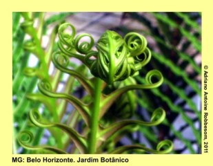 adrianoantoine_mg_bh_jardim_botanico_0014