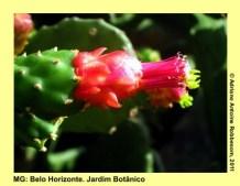 adrianoantoine_mg_bh_jardim_botanico_0019