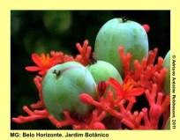 adrianoantoine_mg_bh_jardim_botanico_0023