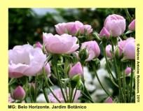 adrianoantoine_mg_bh_jardim_botanico_0024