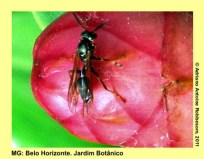adrianoantoine_mg_bh_jardim_botanico_0026