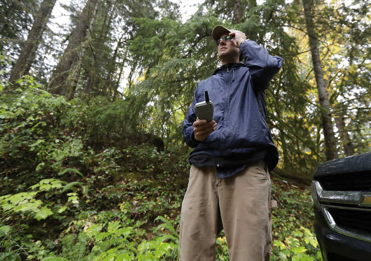 In this Oct. 23, 2018 photo, Dave Wiens, a biologist who works for the U.S. Geological Survey, stands in a forest near…