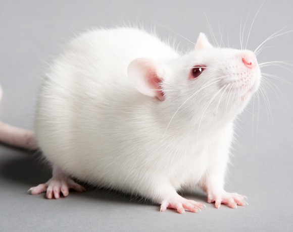 Employing Acoustic, Tactile and PPI Startle Response Procedures in Rodent Behavioral Research