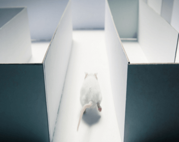 WEBINAR SERIES – Animal Behavioral Neuroscience 2015